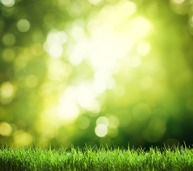 green grass in sunny forest