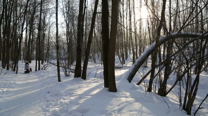 Winter forest, lit by the sun, mother and children on the walk