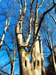 alberi d'inverno