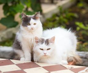 Two friends pretty cats