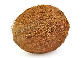One fresh coconut on white background.
