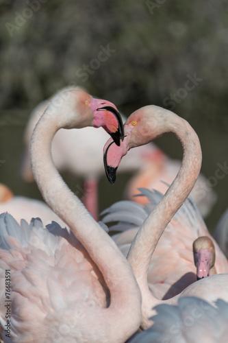 Foto op Aluminium Flamingo Gruppe Flamingos 4