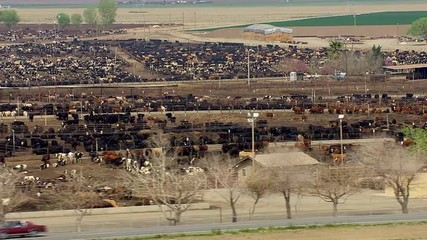 Cattle Shelters