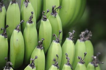 bananen 80