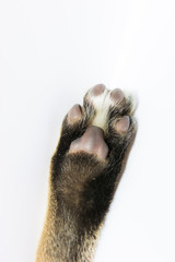 Cat arm raised paw isolated