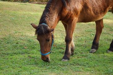 動物園の馬
