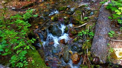 Glacier National Park Stream Scenery