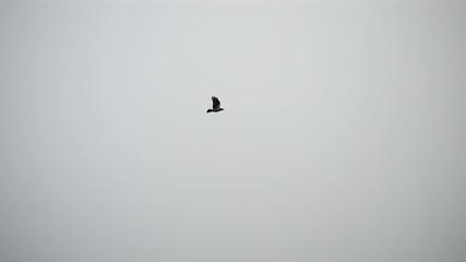 Bird flies over frozen water storage reservoir