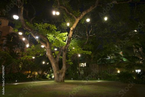 Large Hawaiian Tree with lights on it at night