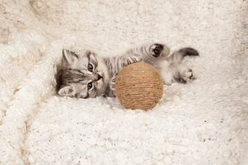 nice kitten plays with a ball