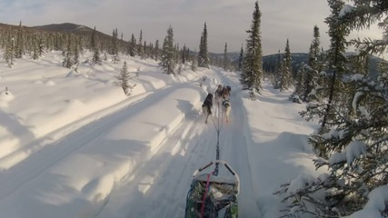 Snow Dog Sled Mushing