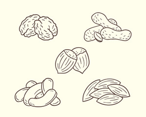 Collections Of Nuts Illustrations In Sketch Style