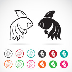 Vector image of an goldfish on white background