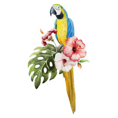pattern toucan parrot tropical jungle nature background