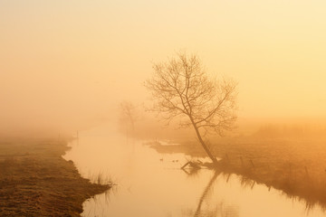 Lonely tree on the river in morning light