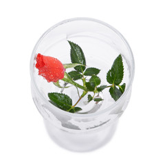 Red rose flower in a glass goblet isolated on white background