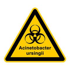 wso126 WarnSchildOrange - acinetobacter ursingii - g3051