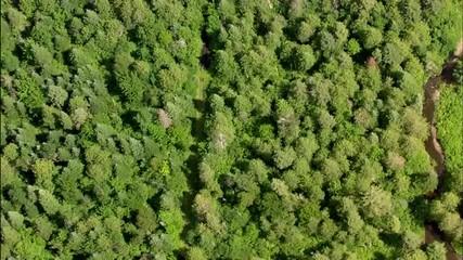 Forest Tree Foliage