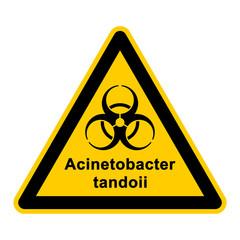 wso132 WarnSchildOrange - acinetobacter tandoii - g3057