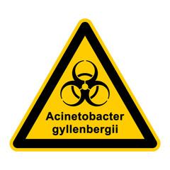 wso134 WarnSchildOrange - acinetobacter gyllenbergii - g3059