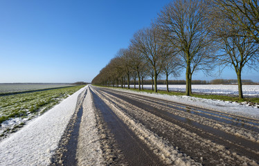 Row of trees along a snowy road in winter