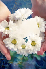 Chrysanthemum with blank card in hands