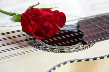 Rose on a Music instrument Charango
