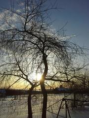 Январский морозный денек! Закат на ветках! Пустые качели!