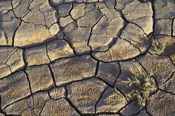 Craked mud