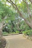 Bench beneath trees in Kirstenbosch poster