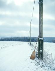 Broom in winter landscape