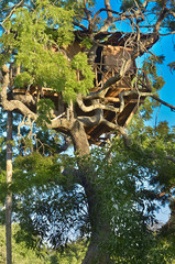 Wildlife Tree House Camp In Yala National Park, Sri Lanka