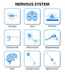 Nervous system. Set icons