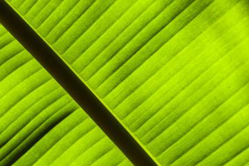 Green palm lef backlit.