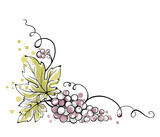 Watercolor illustration, vector -- bunch of grapes