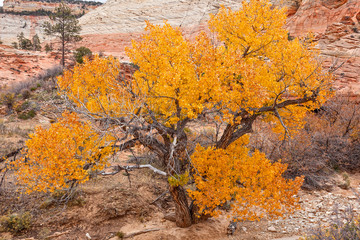 Autumn in Zion National Park
