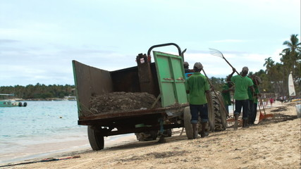 Several workers cleaning beach from sea weed