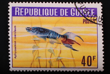 Guinea-circa 1964: Postage stamp image of aquarian fish