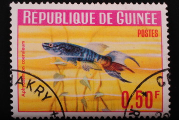 Guinea  1964 Postage stamp  aquarian fish on red background