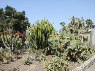 Cacti in Gran Canaria tropical botanical garden
