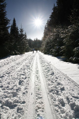 Winter sunny day