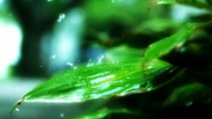 Leaf, rain
