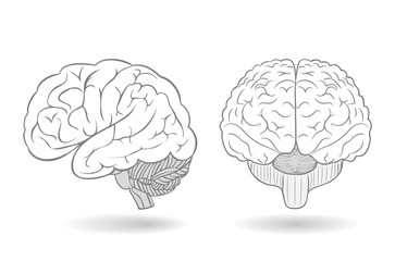 Human brain in two perspectives as an isolated illustration