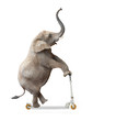 canvas print picture - African elephant (Loxodonta africana) riding a push scooter.