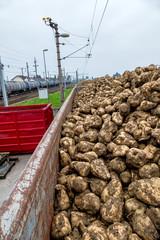 Zuckerrüben und Güterzug