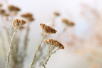 Dried wildflowers on light background