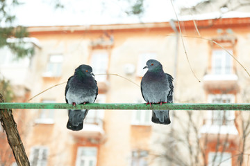 Two doves on crossbar on house and sky background