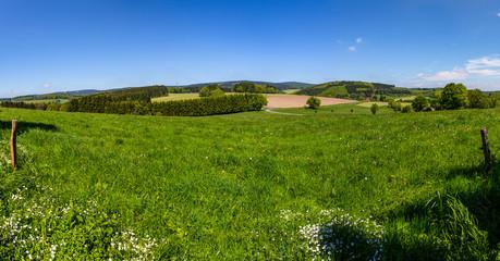 Wonderful green landscape