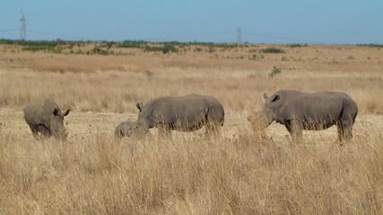 Rhino family poaching horn South Africa