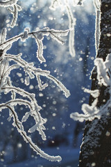 Abstract View of Winter Snow on Tree Branches